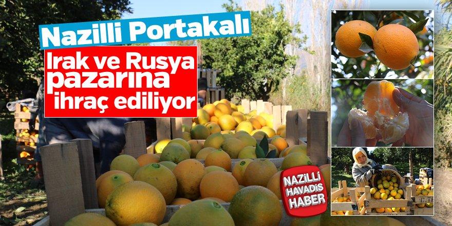 """""""Nazilli Portakalı"""" Irak ve Rusya pazarına ihraç ediliyor"""