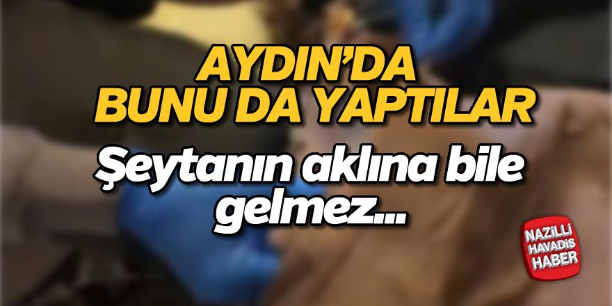 Aydın'da pasta kutusunda uyuşturucu sevkiyatı