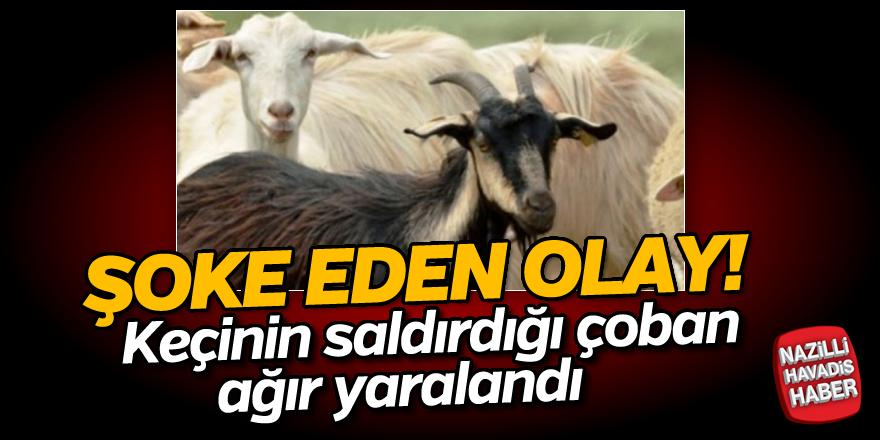 Keçinin saldırdığı çoban ağır yaralandı