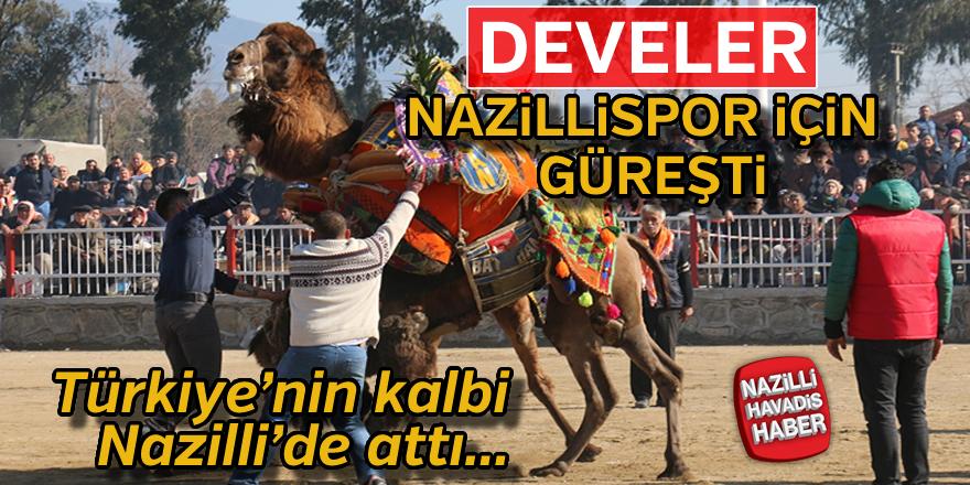 Nazilli Deve Güreşi Festivali yapıldı