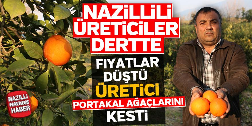 Nazilli'de, fiyatlar düştü üretici portakal ağaçlarını kesti