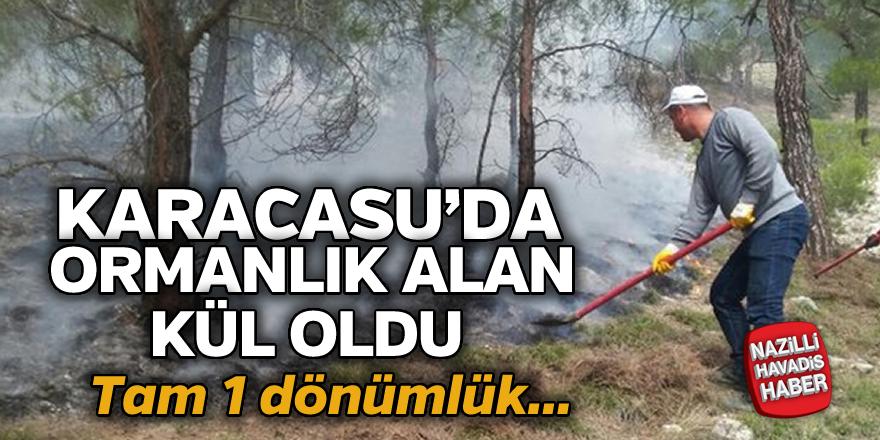 Ormanlık alan cayır cayır yandı