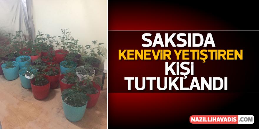 Aydın'da saksıda kenevir yetiştiren kişi tutuklandı