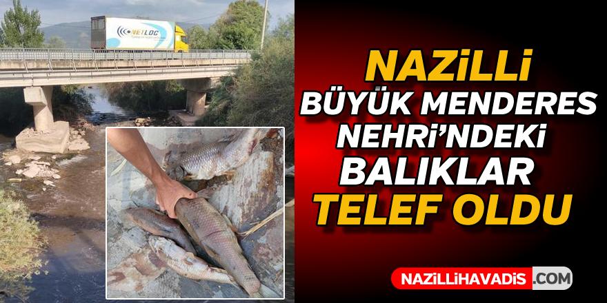 Büyük Menderes'te balıklar telef oldu