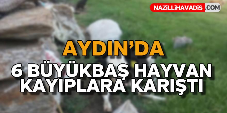 Aydın'da 6 büyükbaş hayvan kayboldu