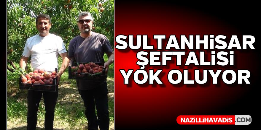 Sultanhisar şeftalisi yok oluyor
