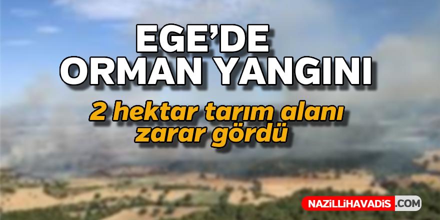 Ege'de orman yangını