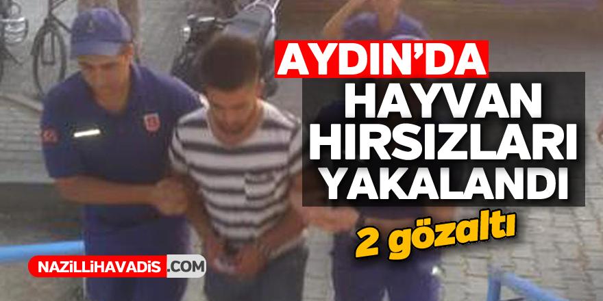 Aydın'da hayvan hırsızları yakalandı ; 2 gözaltı