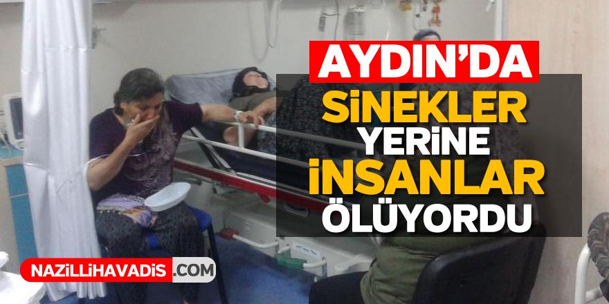 Aydın'da sinekler yerine insanlar ölüyordu