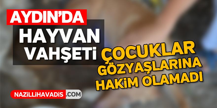Aydın'da hayvan vahşeti
