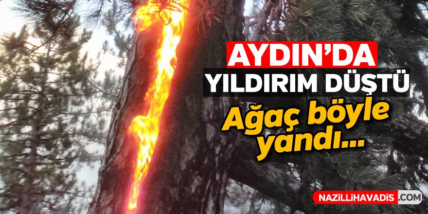 Aydın'da yıldırım düşen ağaç yandı