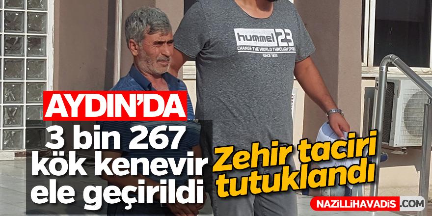 Aydın'da 3 bin 267 kök kenevir ele geçirildi