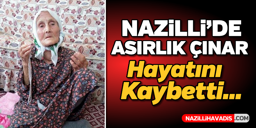 Nazilli'de asırlık çınar hayatını kaybetti