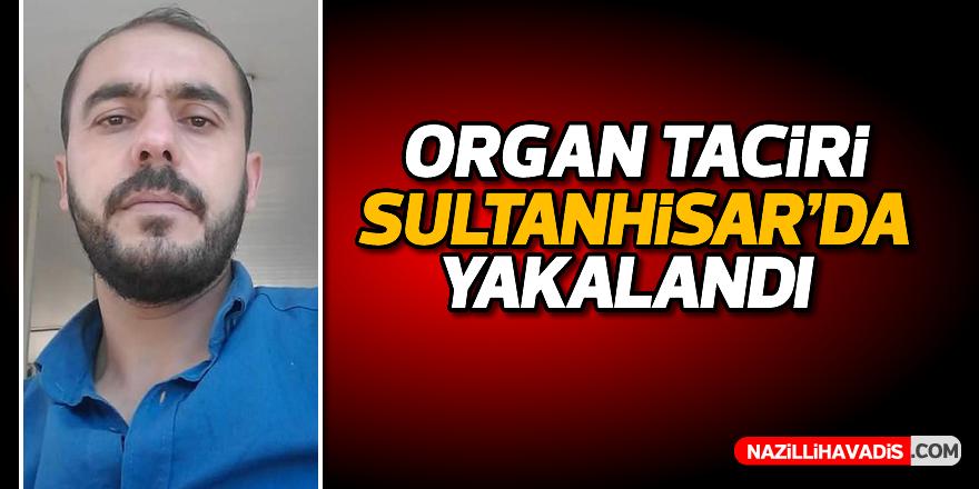 Organ taciri Sultanhisar'da yakalandı