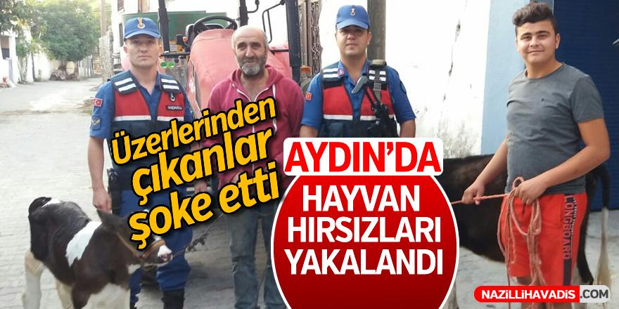 Aydın'da hayvan hırsızları yakalandı