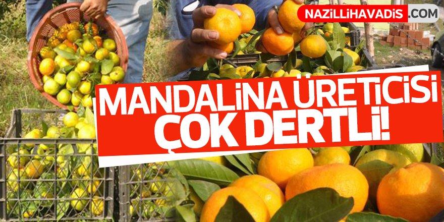 Mandalina üreticisi çok dertli!