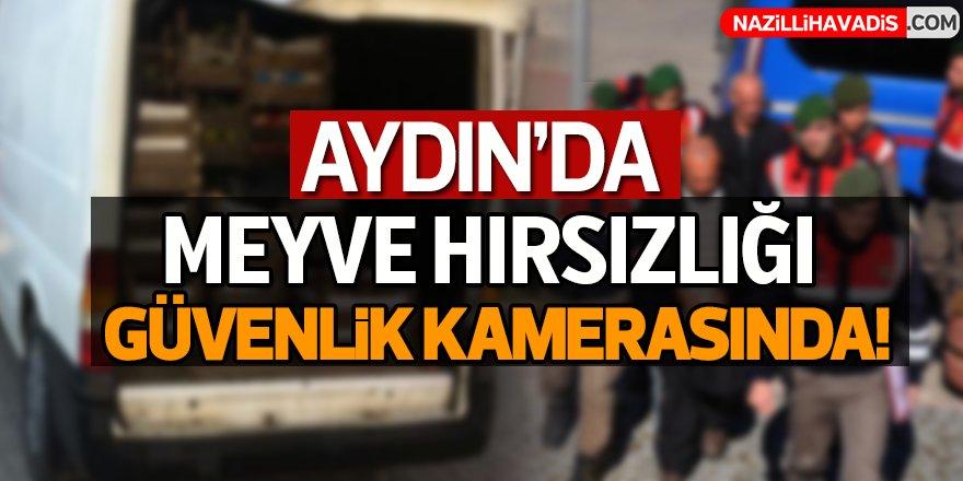 Aydın'da meyve hırsızlığı güvenlik kamerasında!
