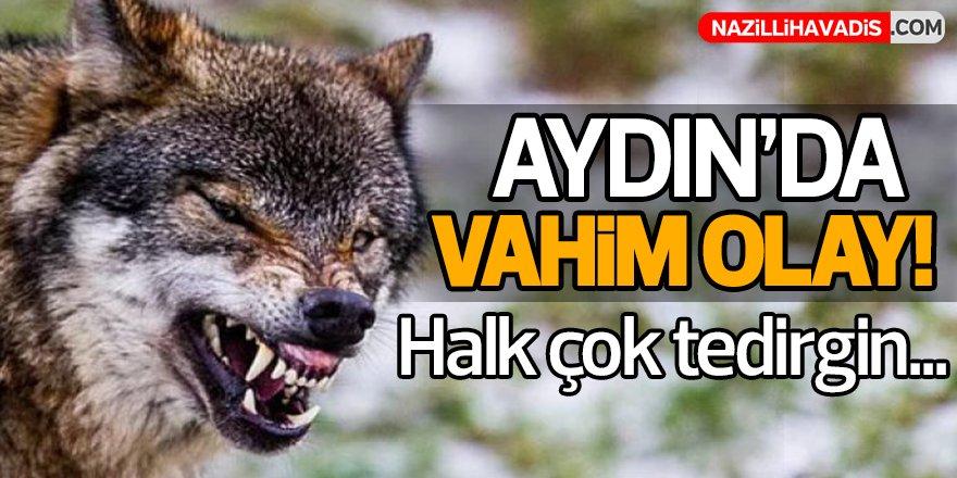 Aydın'da Halkı Tedirgin Eden Olay!