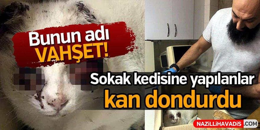 Sokak kedisine yapılanlar kan dondurdu