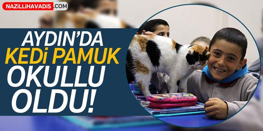 """Aydın'da kedi """"Pamuk"""" okullu oldu!"""