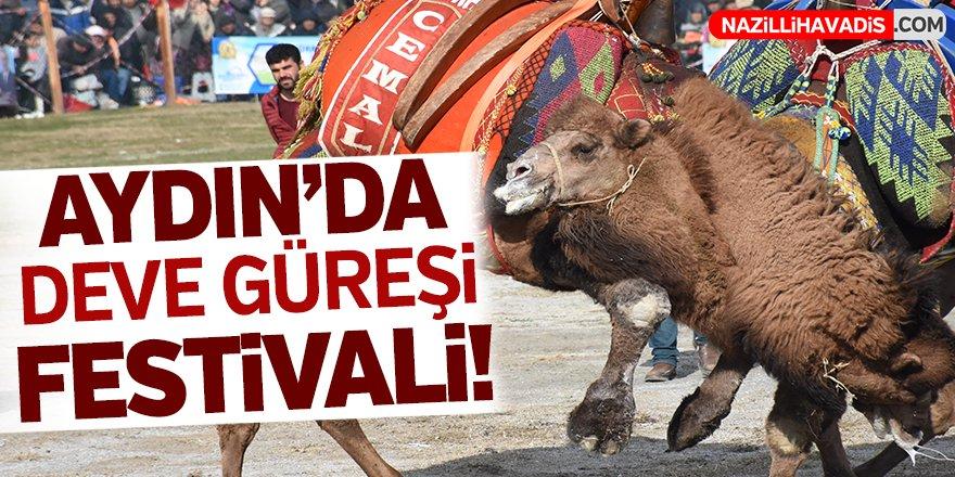 Aydın'da deve güreşi festivali!