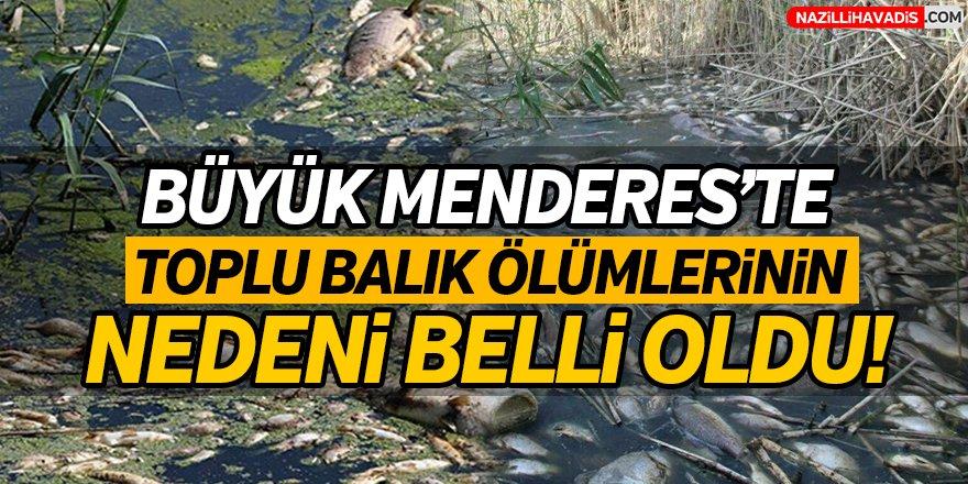 Büyük Menderes'teki toplu balık ölümleri soruşturmasında karar verildi!