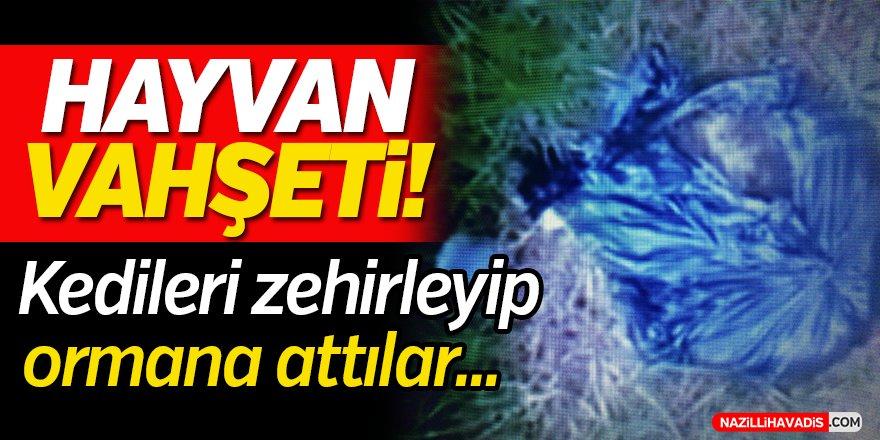 Hayvan Vahşeti!