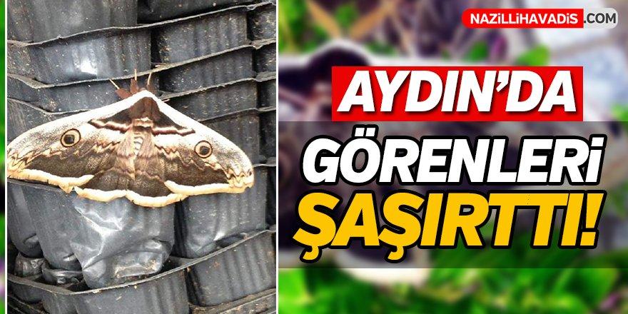 Aydın'da Görenleri Şaşırttı!