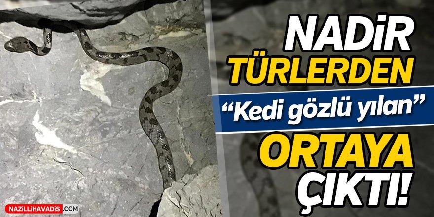 Nadir görülen yılan türü ortaya çıktı!