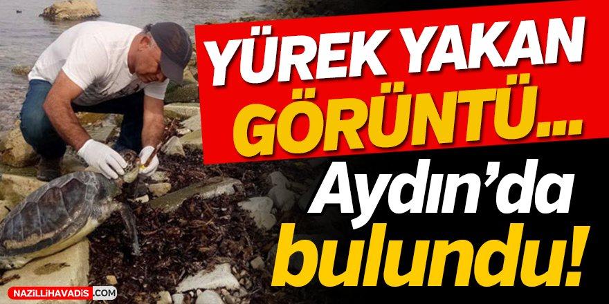 Aydın'da Yürek Yakan Görüntü!