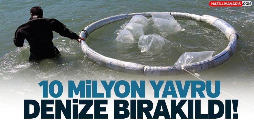 10 Milyon Yavru Denize Bırakıldı!
