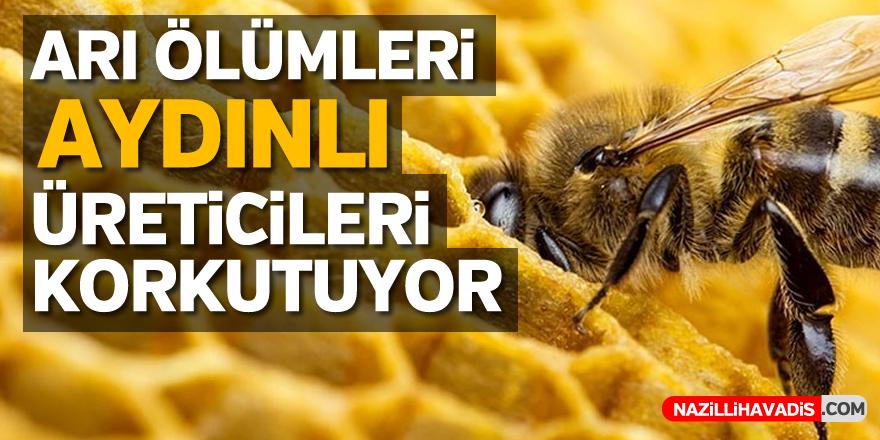 Arı ölümleri üreticileri endişelendiriyor...