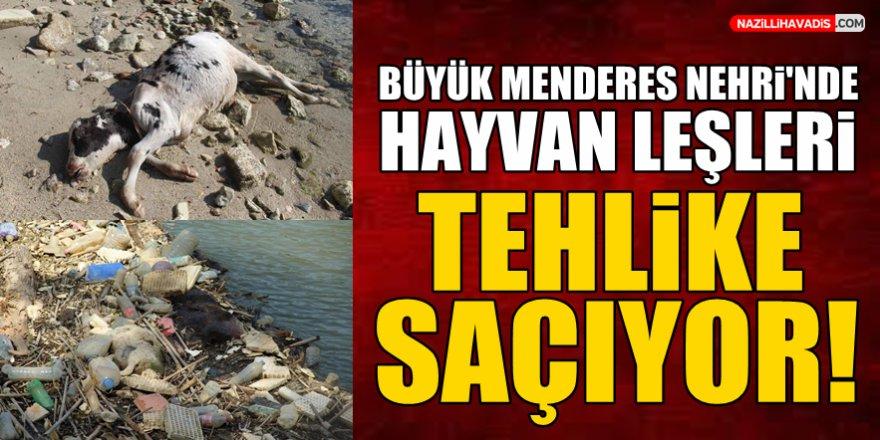 Büyük Menderes Nehri'nde hayvan leşleri tehlike saçıyor!