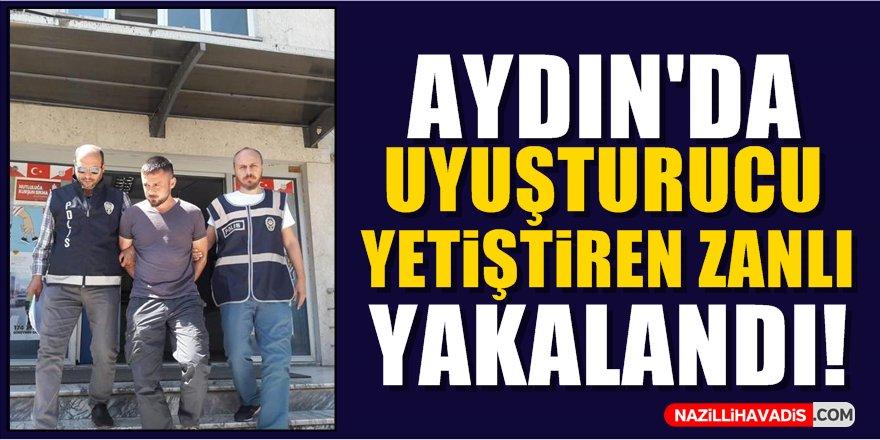 Aydın'da uyuşturucu yetiştiren zanlı  yakalandı!