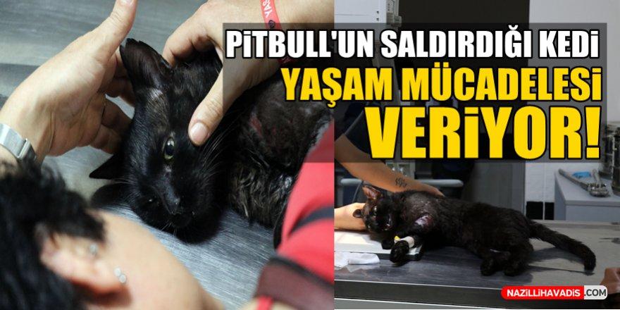 Pitbull'un saldırdığı kedi yaşam mücadelesi veriyor!