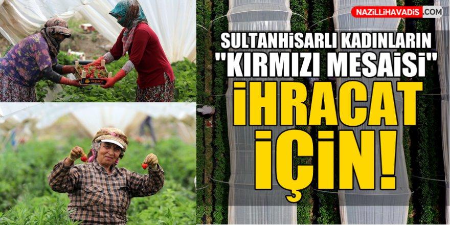"""Sultanhisarlı kadınların """"kırmızı mesaisi"""" ihracat için!"""