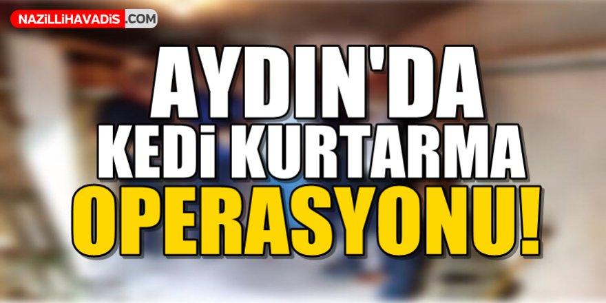 Aydın'da kedi kurtarma operasyonu!