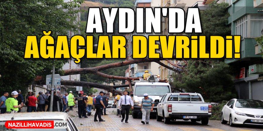 Aydın'da ağaçlar devrildi!
