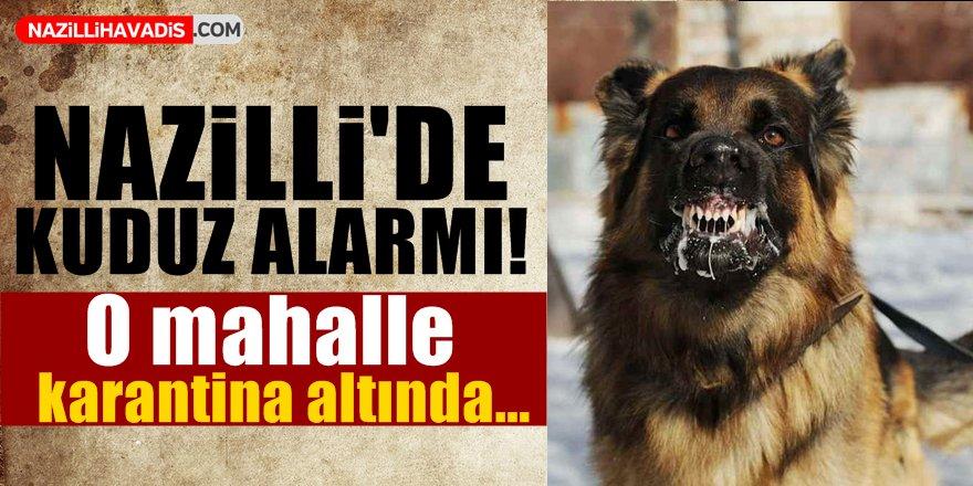 Nazilli'de Kuduz Alarmı!