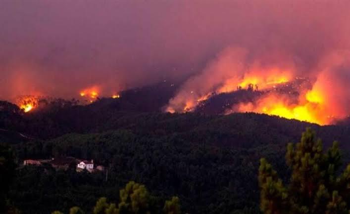 Nazilli'de orman yangını!