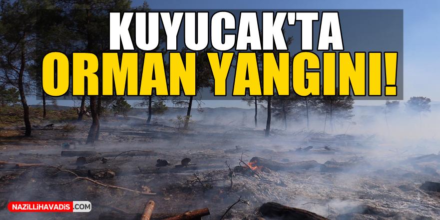 Kuyucak'ta orman yangını!