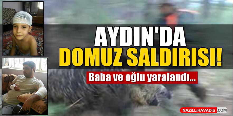 Aydın'da Domuz Saldırısı!