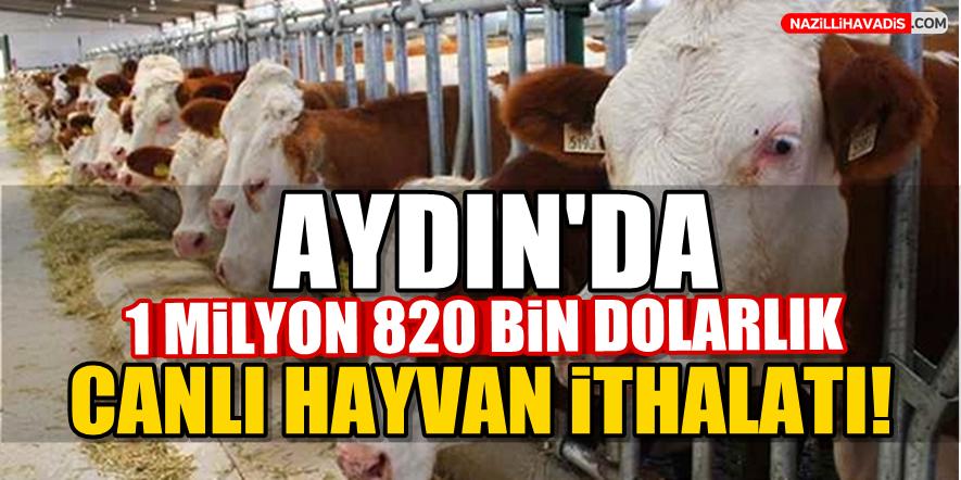 Aydın'da 1 milyon 820 bin dolarlık canlı hayvan ithal edildi
