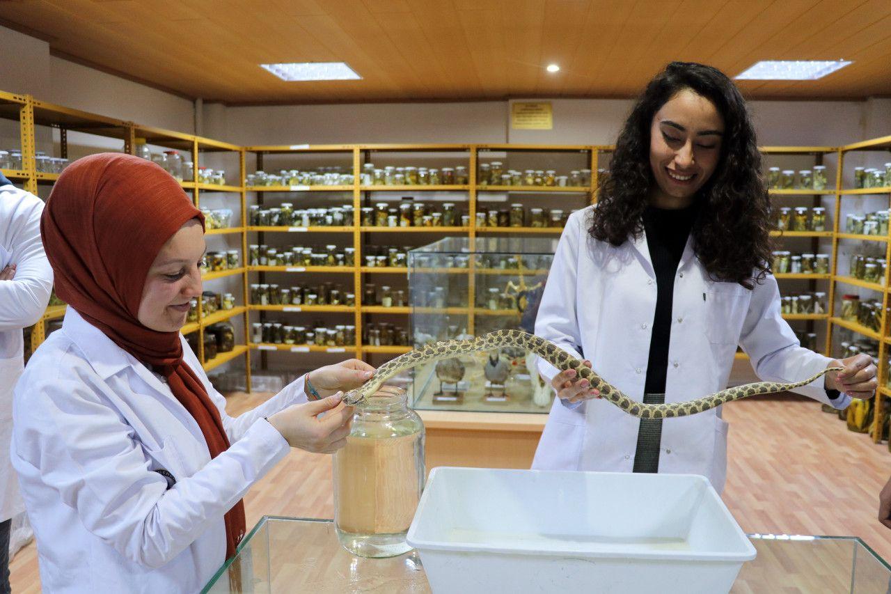 Yılan Müzesi'ni ziyaret edenler sürüngen korkularını yeniyor
