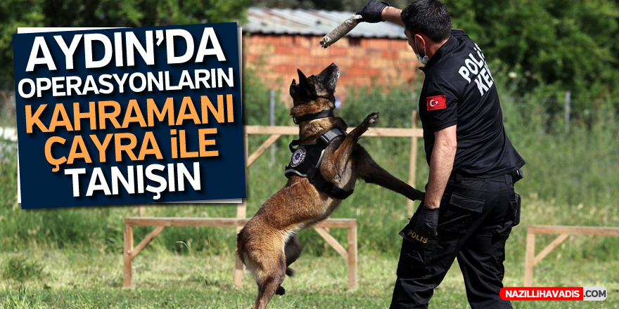 Narkotik köpeği Çayra, tecrübesini konuşturuyor