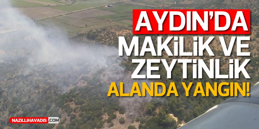 Aydın'da makilik ve zeytinlik alanda yangın