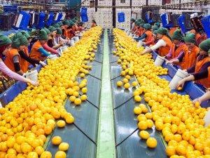 TKDK'dan meyve, sebze üreticisine hibe desteği