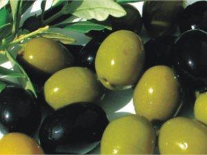 Aydın'da Zeytinyağı Hasat Şenliği Düzenlenecek