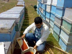 Aydınlı arıcılar polen ithalatını engellemek için üretime ağırlık verdi