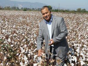Kocabaş: Yüksek maliyet çiftçiyi pamuktan uzaklaştırıyor